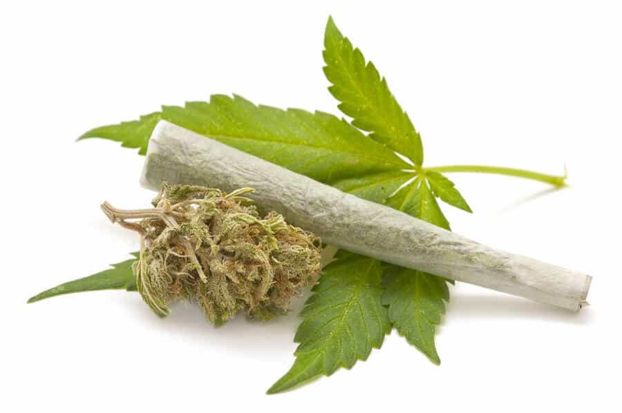 Hemp-cannabis-37601347